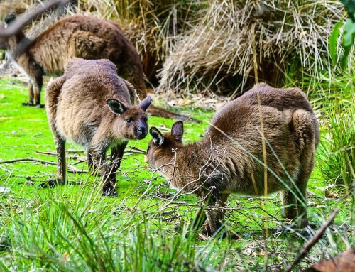 Top 10 Things to Do on Kangaroo Island South Australia