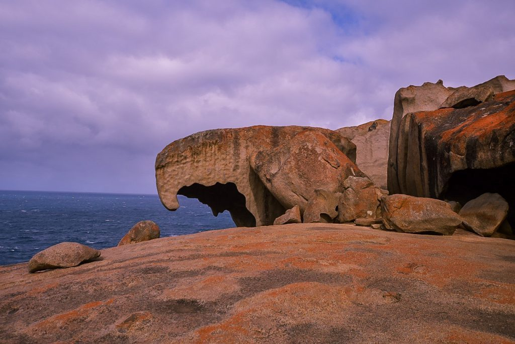 flinders chase national park is one of the things to do on kangaroo island south australia