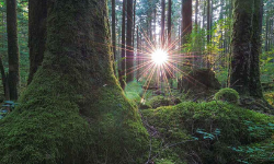 sun peeking through trees of a fraser valley hiking trail