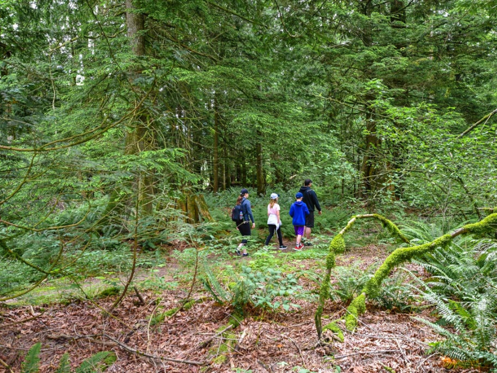 Jami Savage and family Forest Bathing in Harrison