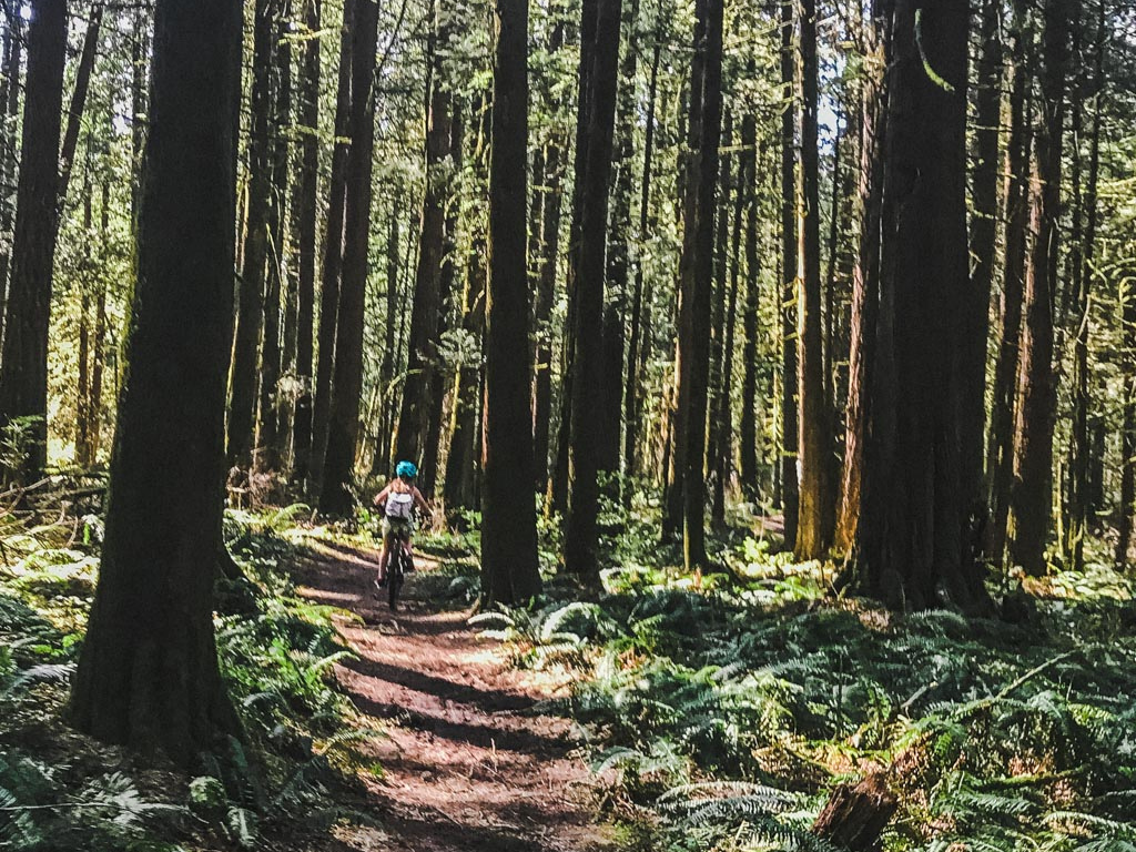 Child ridding a bike in the forest during summer 2020