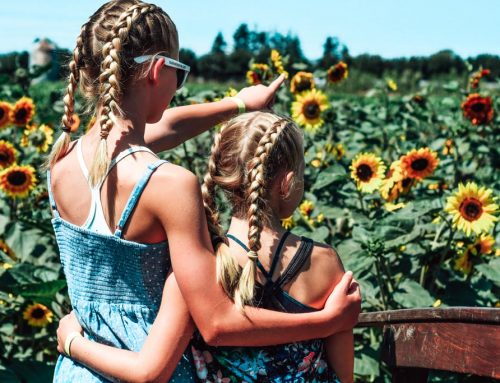 Sunny Days in the Sunflower Maze at the Abbotsford Sunflower Festival