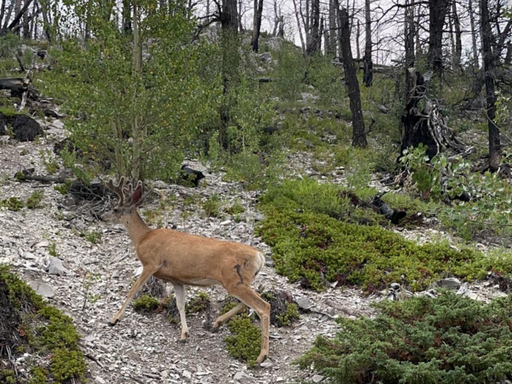 deer on hillside beside hiking trail