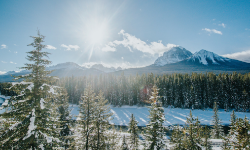 view of a snow covered banff forest